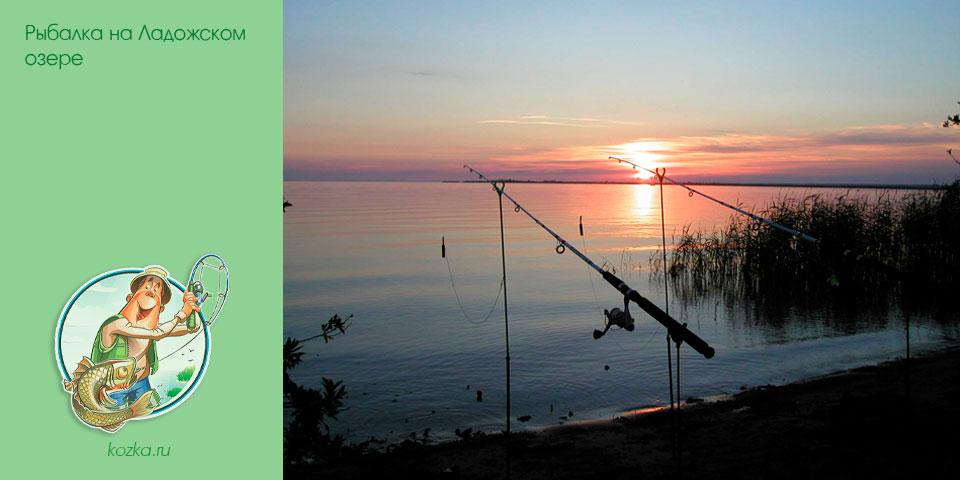 рыбалка, ладожском, озере